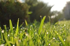 grass-364116_1280